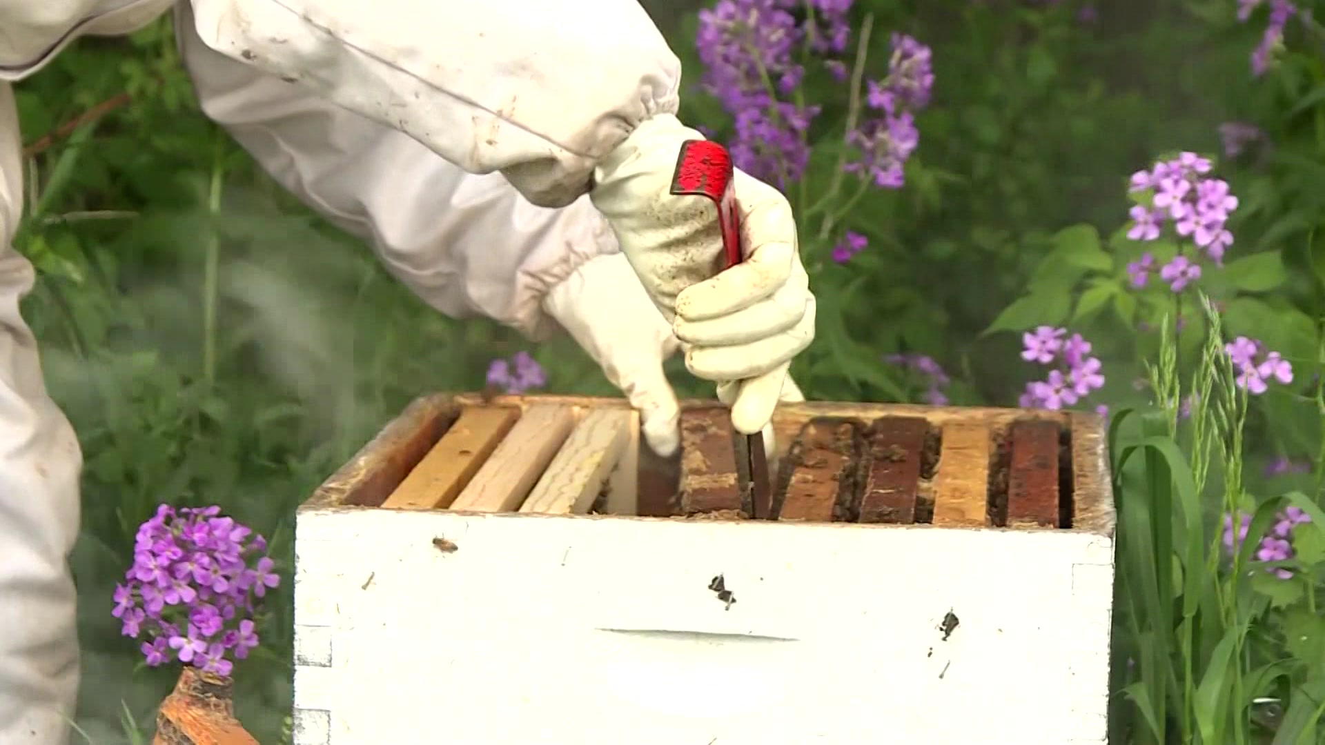 Lawmakers introduce legislation to save the bees